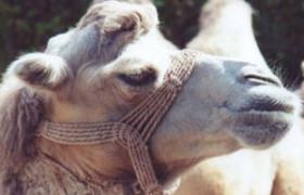 Cameltoe Fotos von berühmten Stars und Sportlerinnen